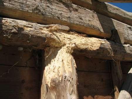 Les, ki ni bil globinsko zaščiten z impregnacijo