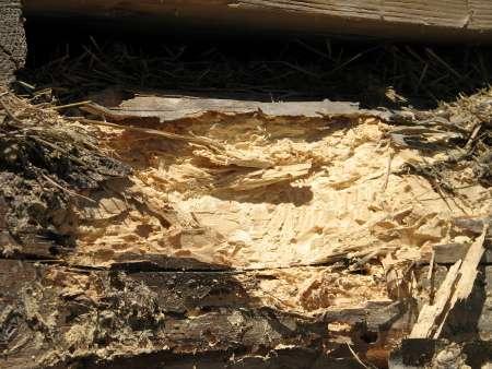 Les, ki ni globinsko zaščiten z impregnacijo, je izpostavljen zgodnejšemu propadanju